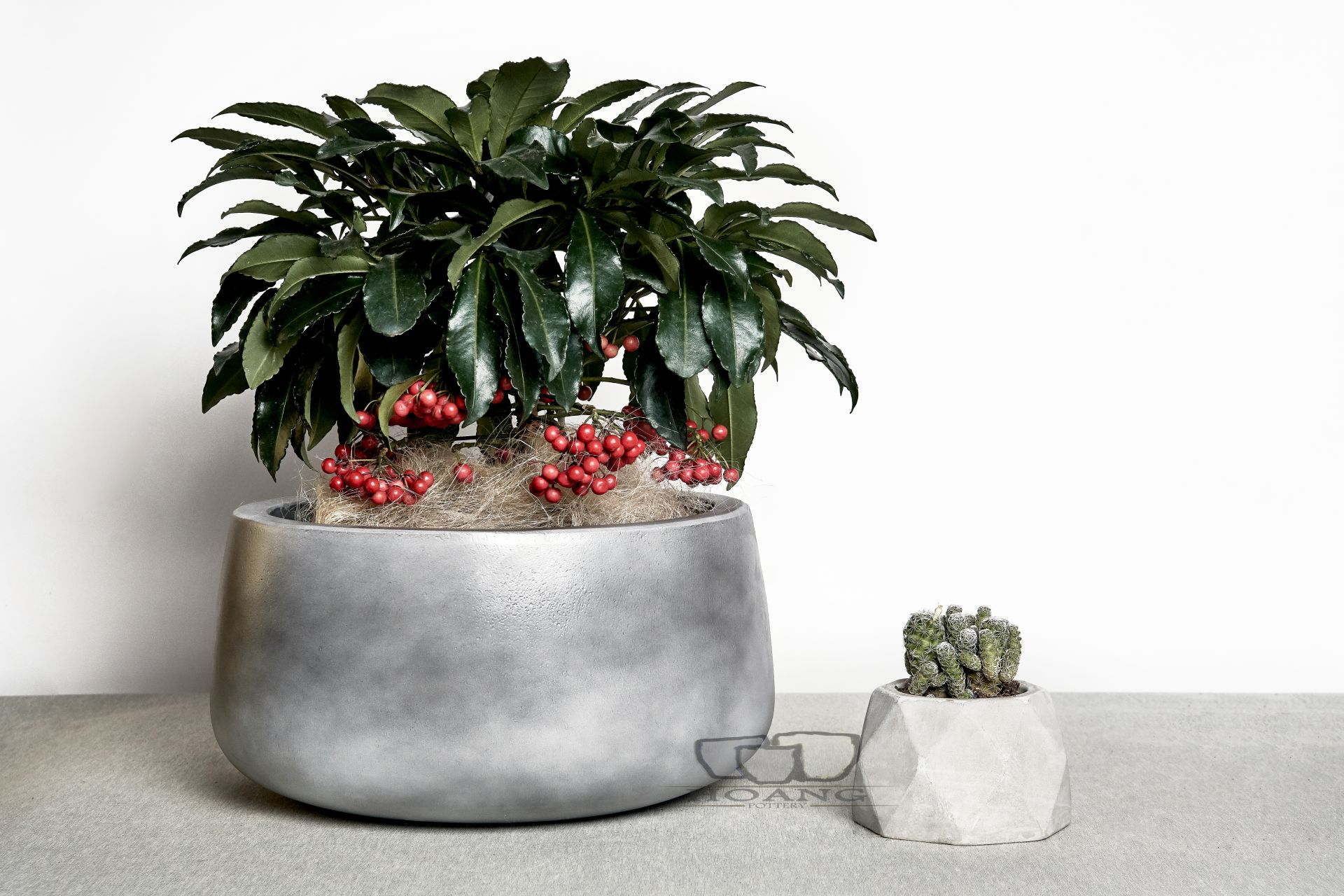 Cement pots are having a moment in interior and exterior design.