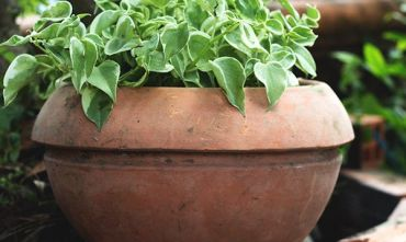 USEFUL TIPS TO TAKE CARE OF YOUR GARDEN PLANTS IN WINTER